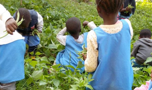 bambini e agricoltura